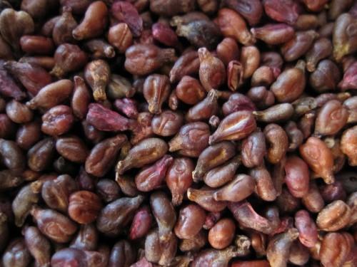 Naturfülllstoff Bio Traubenkerne